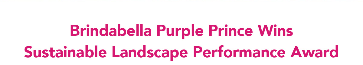 Brindabella Purple Prince Wins Sustainable Landscape Performance Award