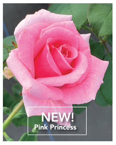 Brindabella Pink Princess