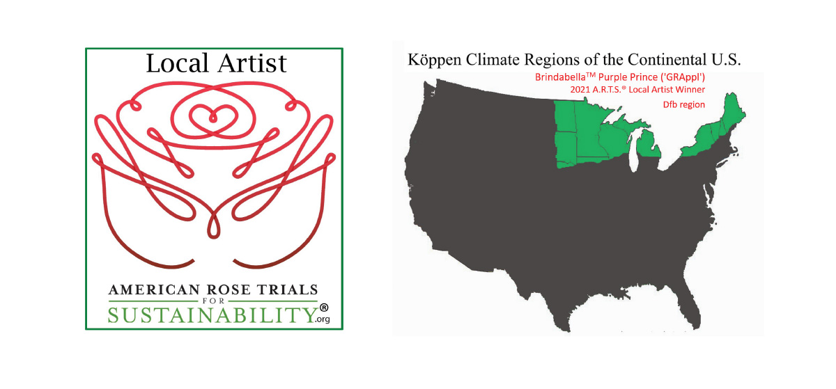 Local Artist - American Rose Trials for Sustainability
